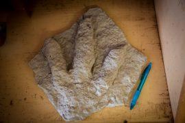 Akrcanthasaurus Footprint (Custom)