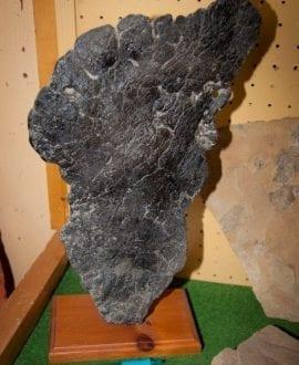 Stegasaurus Plate on Stand (Custom)
