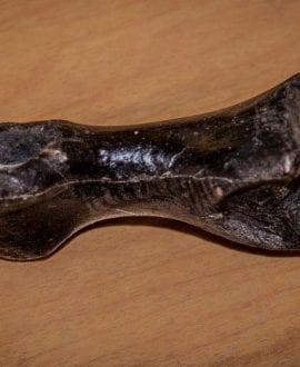 TRex Toe (Custom)