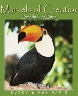 marvels-breathtaking-birds