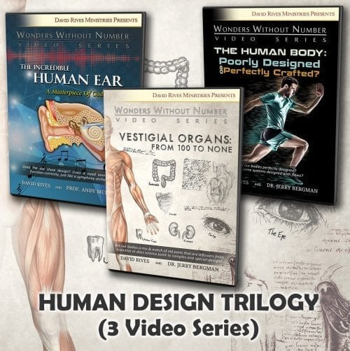 The Human Design Video Trilogy