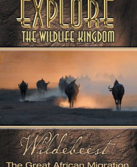 wildebeest dvd cover