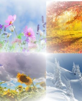 Seasons Wonders- Blu-Ray DVD   Creation Scapes