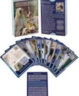 God's Living Treasures - Amazing Animals of Alaska | CREATION CARDS | BDM