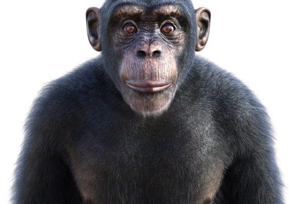 An Ape Of An Hoax